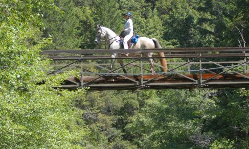 leadership horse